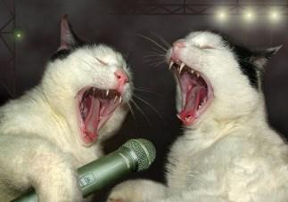 [singing+cats.jpg]