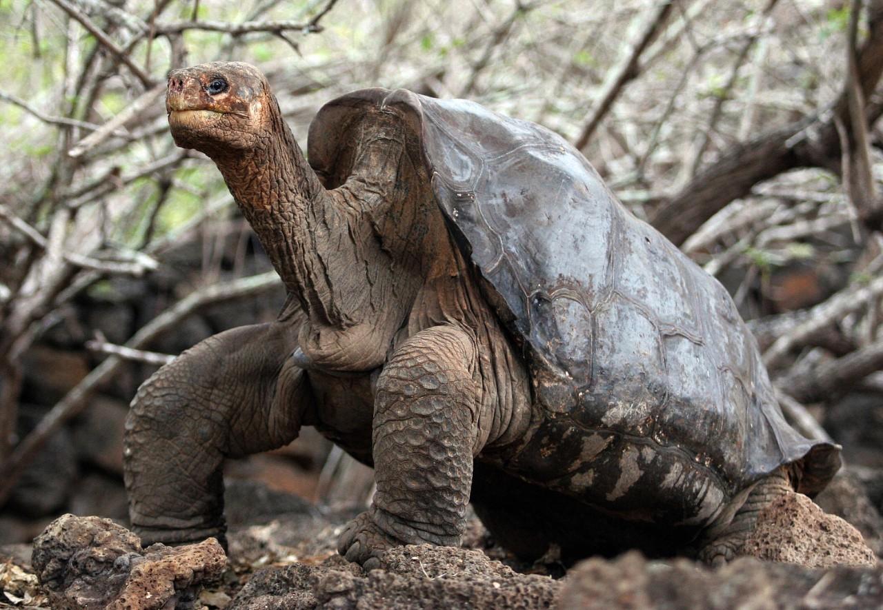 Warning turtles amp tortoises inc - Warning Turtles Amp Tortoises Inc 51
