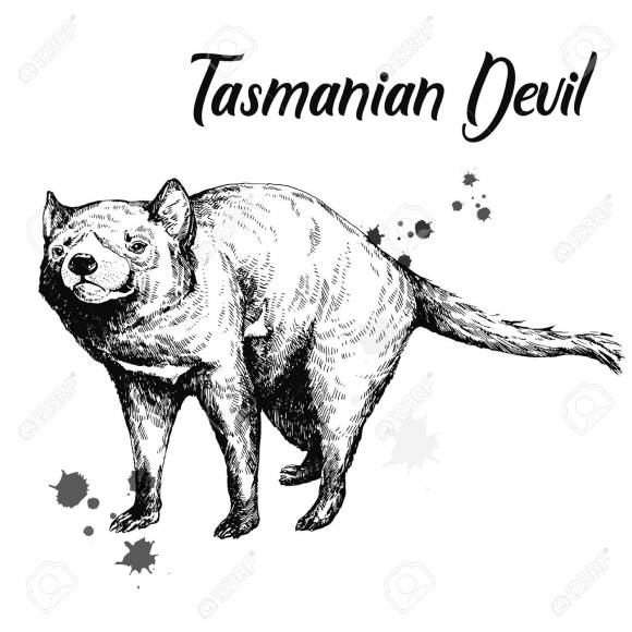115863497-hand-drawn-sketch-style-tasmanian-devil-isolated-on-white-background-vector-illustration-